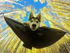 Good morning   Photo credit: @desertstorm_trooper  #dogsthathike