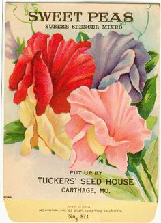 Vintage Flower Seed Packet Tucker's  Sweet Peas Lithograph