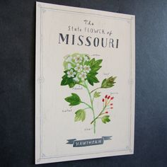 the missouri state flower print (from an original painting) makes a great…