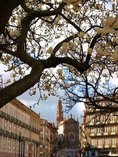 Preciosidades portuenses