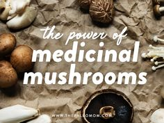 Mushrooms are an incredibly valuable nutrient-dense food that offers our gut bacteria unique fiber types that we can't get from any other food. Thyroid Health, Gut Health, Mushroom Species, Turkey Tail Mushroom, Paleo Mom, Paleo Diet, Mushroom Benefits, Gut Microbiome, Autoimmune Paleo