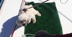 "Train Dog to be a Boat Dog - Training your dog to ""go"" on the boat is well worth the time and effort. Sailboat Living, Living On A Boat, Dogs On Boats, Liveaboard Boats, Sailboat Interior, Free Boat Plans, Boat Decor, Boat Safety, Boat Projects"