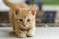 Yoga Kitten | Flickr - Photo Sharing!