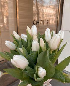 Flowers Nature, My Flower, Beautiful Flowers, Spring Aesthetic, Flower Aesthetic, White Tulips, White Flowers, Planting Flowers, Aesthetics