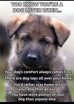 All of the above! #true #doggie #love