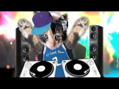 Dj Cool Paws (This Kitty has skills) - YouTube