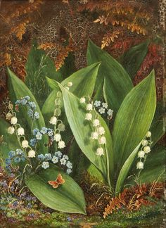 Albert Durer Lucas. Lily Of The Valley