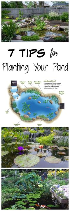 7 Tips for Planting Your Pond - Aquascape, Inc. Tips for Planting Your Backyard Pond Goldfish Pond, Turtle Pond, Diy Pond, Pond Fountains, Pond Waterfall, Natural Pond, Pond Landscaping, Water Pond, Water Features In The Garden