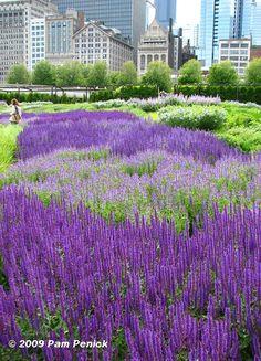 Lurie Garden, Chicago, IL - a rooftop garden designed by Piet Oudolf