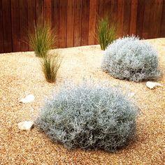 Coastal gravel garden www.jamesrosslandscape.com.au