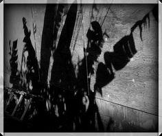 Molokai Girl: Shadow Puppets