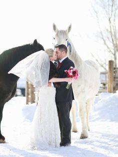 Our team of horses at The Home Ranch pose with the Bride & Groom