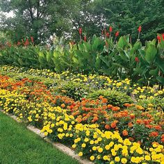 Cottage garden style is all about soft lines, heirloom varieties, and unstructured flower beds. These romantic plants are must-haves for a romantic cottage-style garden. Short Plants, Tall Plants, Foliage Plants, Plants Indoor, Outdoor Plants, Most Beautiful Gardens, Beautiful Flowers Garden, Colorful Plants, Colorful Garden
