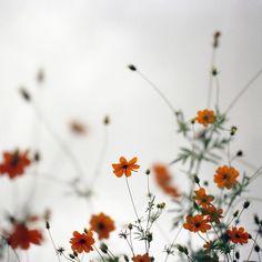 ✽   wildflowers   -  fuzuki2   -flickr