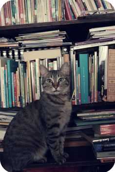 Pascual, the librarian cat <3 #cat #books
