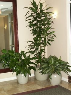 Plants in home office | Interior Landscaping & Office Plants Tewksbury MA Metro Tropical 617 ...