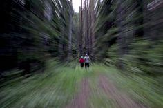 Night walk in the woods
