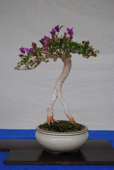 Fotos de la 2ª exposición de bonsái Feria de Plantas y Flores de Sta. Cruz de Tenerife (I).