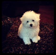 Demi Lovato Gets a Puppy: Cutest Christmas Gift Ever? | Cambio