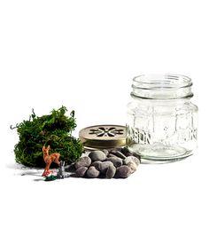 Terrarium Kit by ACME Party Box Company on #zulily # ad *I am a sucker for terrarium. So CUTE.