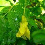 Riippahernepensas lähempää Plant Leaves, Vegetables, Plants, Green Houses, Flowers, Vegetable Recipes, Plant, Veggies, Planets