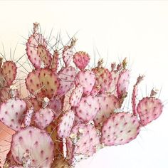 Pink Cacti #brokenenglishjewelry #inspo #inspiration #pink #cactus #pastels