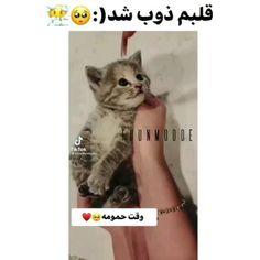 Cute Baby Animals, Cute Babies, Cats, Gatos, Cat, Kitty, Funny Babies, Kitty Cats