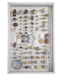 Natural Shells on Clear Glass Backing*shell type & layout vary