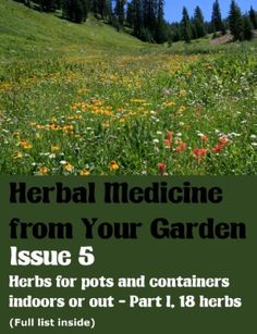 Herbs for pots and containers