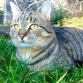 Švajčiarske syrové špízy so šunkou (fotorecept) - recept Animals, Rustic, Animaux, Animal, Animales, Animais