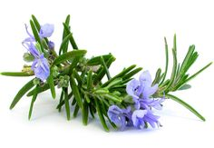 Rosemary: Health Benefits, Precautions, Drug Interactions http://www.medicalnewstoday.com/articles/266370.php  #massageenvyhi #health #wellness #beauty #joy #happiness #themoreyouknow