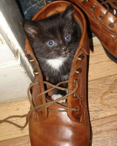 If I fits, I sits: 18 photos that prove cats can get comfortable anywhere #cats #pets #animals