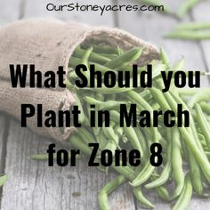 This February Seed Starting Schedule is for those of you that live in the colder northern zones. Now is the time to get serious about starting seedlings! Growing Green Beans, Tips For Growing Tomatoes, Growing Vegetables, Growing Shallots, Canned Pickled Beets, Everbearing Strawberries, Drip Irrigation System, Drip System, Garden Watering System