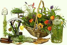 FREE GUIDE To Edible And Medicinal Plants - Herbal Medicine in5d in 5d