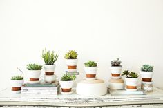 Painted pots and succulents, by Offbeat   Inspired