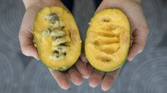 PawPaw Fruit    You won't find the pawpaw, which tastes like a cross between a mango and a banana, in most grocery stores, even though they're native to North America. But the locavore food movement has embraced it.    http://www.npr.org/sections/thesalt/2017/09/15/550985844/this-once-obscure-fruit-is-on-its-way-to-becoming-pawpaw-pawpular