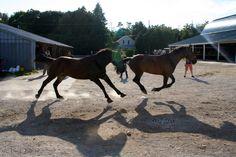 running free #horses