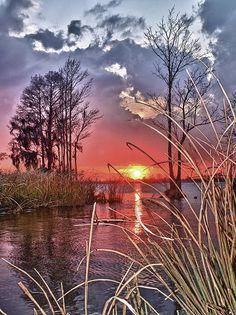 Winter sunset through the marsh grass, Pawleys Island, South Carolina  <3