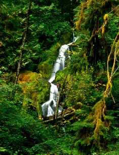 From US Highway 101, approximately 12 miles south of Forks, take the Upper Hoh River Road to its end, 18 miles deep into the rain forest, to Olympic National Park Hoh Visitor Center. Park in the lot adjacent to the Center and follow the signs for Hoh River Trail destinations upstream, catching glimpses of the river and its braided, and sometimes swollen, channel along the way.