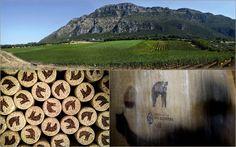 Vi presentiamo oggi un'altra azienda che rappresenta una delle eccellenze del Made in Italy e che parteciperà alla prossima edizione di Salotti del Gusto: l'Azienda Agricola San Salvatore.   Situata nel Parco nazionale del Cilento, l'Azienda Agricola San Salvatore si caratterizza per un sistema di coltivazione delle viti senza prodotti di sintesi o organismi geneticamente modificati e l'adozione di preparati biodinamici che favoriscono la naturale fertilità del terreno…