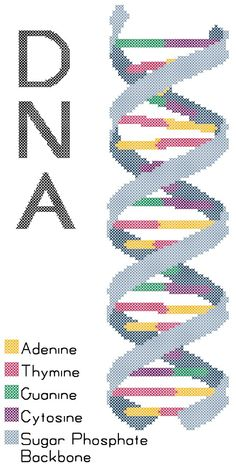 DNA Strand Counted Cross Stitch Pattern PDF. $5.00, via Etsy.