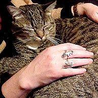 Feline paralysis, lap cats :)