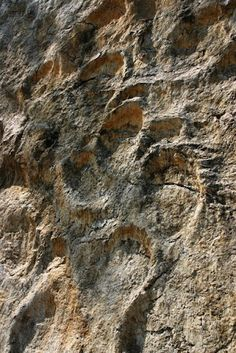 Dinosaur Footprints - Jura France by Annick Monnier