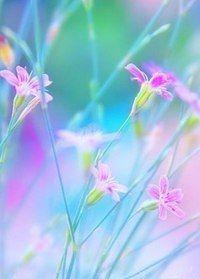 flowers in pastel Beautiful Flowers Wallpapers, Beautiful Nature Wallpaper, Pretty Wallpapers, Pastel Flowers, Pretty Flowers, Spring Flowers, Pretty Pastel, Flower Phone Wallpaper, Flower Backgrounds