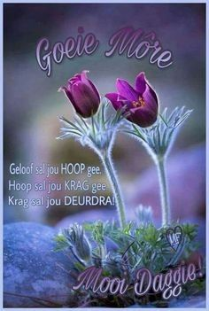 Good Morning Rainy Day, Good Morning Wishes, Good Morning Inspiration, Afrikaanse Quotes, Goeie More, Morning Blessings, Blessed, Flowers, Plants