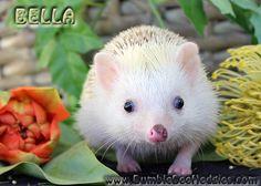 """Isabella AKA """"Bella"""""""