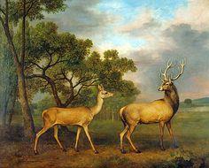 """sitsandwaitsforus: """" George Stubbs: Red Deer Stag And Hind, 1792 """""""
