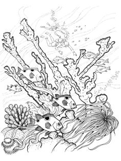 Vintage Ocean Plants Coloring Pages 45 Ocean Coloring Sheets