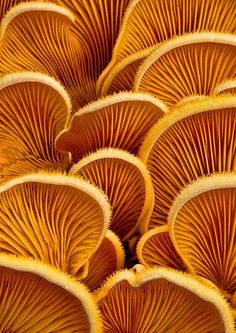 // Photography / colors #orange #mushrooms #photography #colors