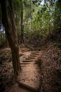 Part of a hiking trail at the Lodge at Chaa Creek in San Ignacio, Belize. A great way to spend your day at this eco-lodge.
